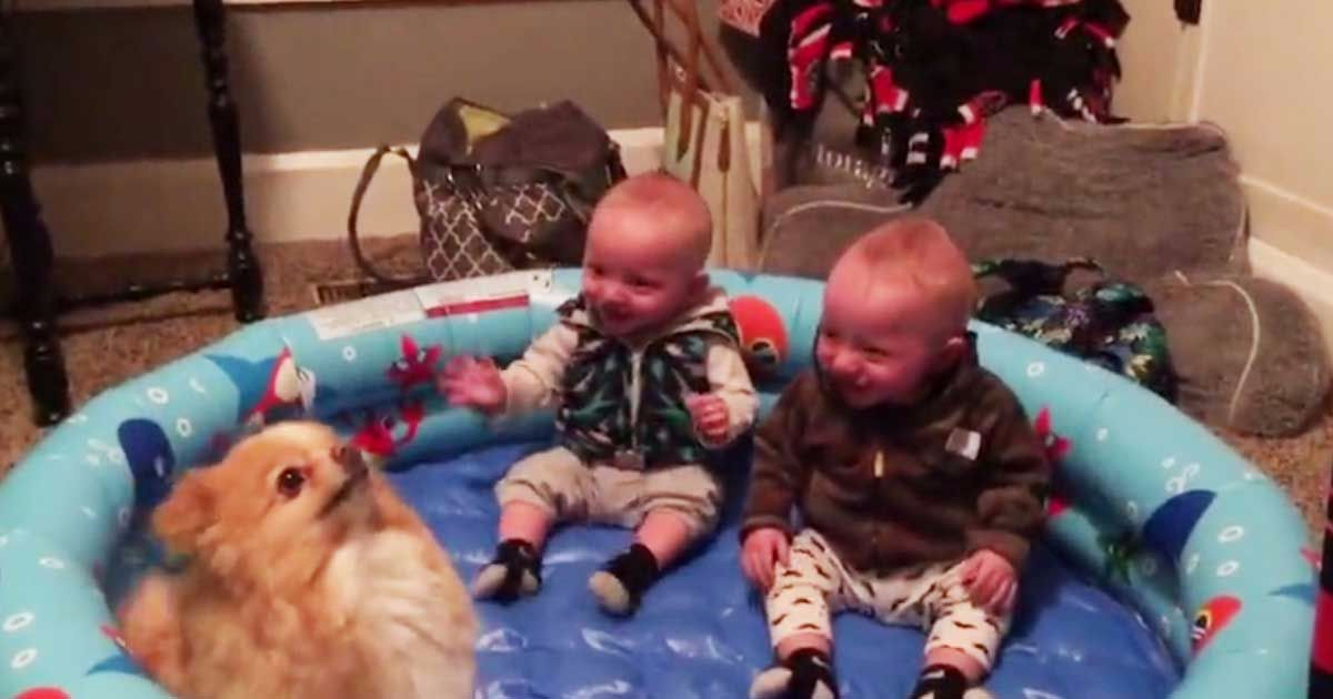 2 twin babies left with little dog in inflatable pool. Watch as the hilarity ensues