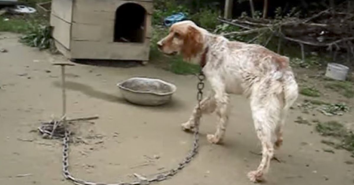 See this dog's reaction as he was set free after being chained up for 5 years