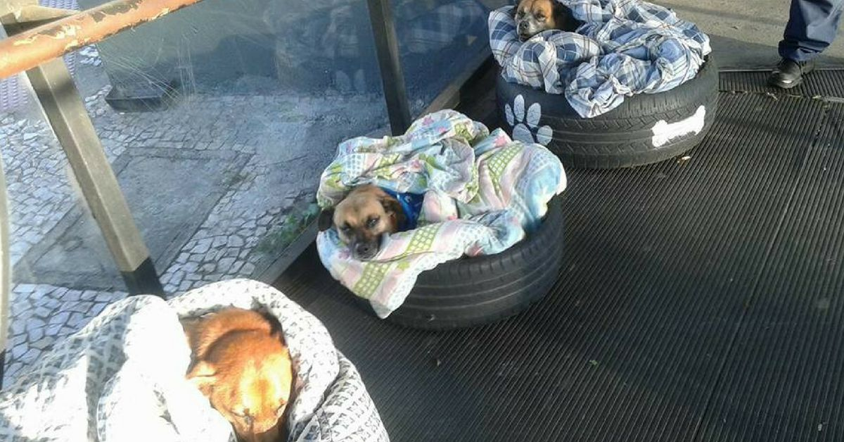 These 3 stray dogs have warm and cozy beds at a bus station thanks to some very kind people